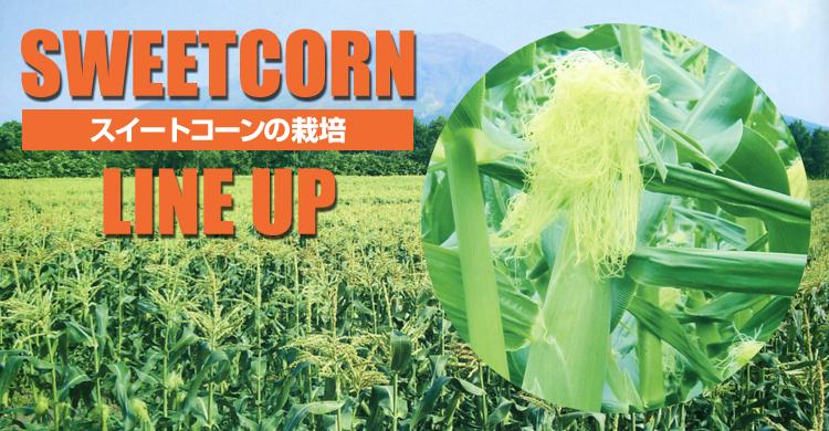 スイートコーンの栽培