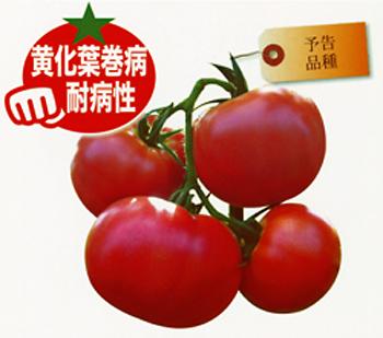 トマト AMS-009