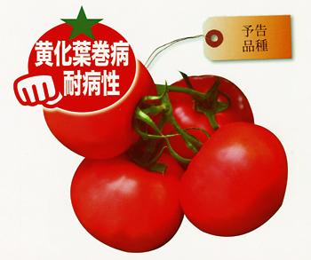トマト AMS-012