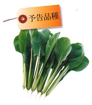 小松菜(コマツナ) AX-102