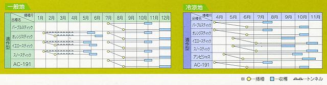 ニンジン AC-191