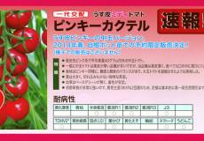 ナント種苗株式会社 / トマト / 一代交配 / ピンキーカクテル うす皮ミディトマト