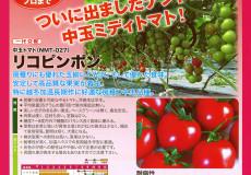 ナント種苗株式会社 / トマト / ナント交配 / リコピンポン(NMT-027 中玉トマト)
