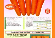 ナント種苗株式会社 / ニンジン / 一代交配 / NCA-31