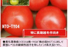 ナント種苗株式会社 / トマト / NT04 大安吉日改良型