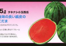 ナント種苗株式会社 / スイカ / ナント交配 / NW-415