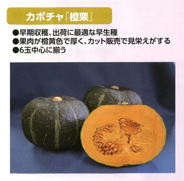 カボチャ『橙栗』
