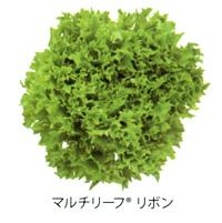 multi-leaf02