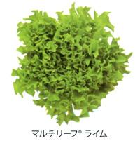 multi-leaf03