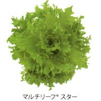 multi-leaf04