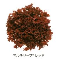 multi-leaf05