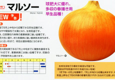 kaneko-yokoku_04
