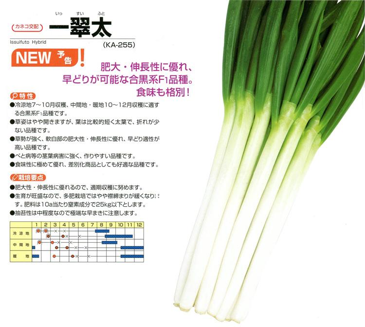 kaneko-yokoku_10