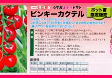 nanto-yokoku_09