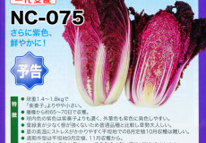 nanto-yokoku_15