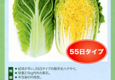 ナント種苗株式会社 / 白菜 / 一代交配 / NC-073