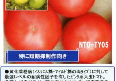 ナント種苗株式会社 / トマト / NT05 大安吉日改良型