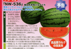 ナント種苗株式会社 / スイカ / ナント交配 / NW-536